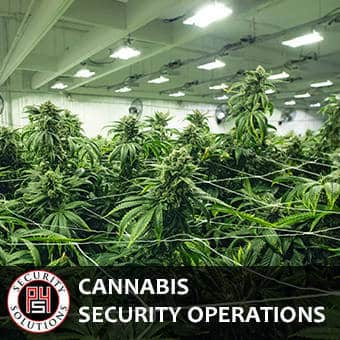 Cannabis Security Operation Services